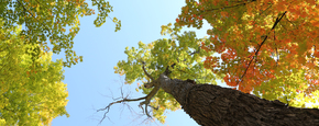 2014 10 life of pix free stock photos trees autumn leaves sky leeroy